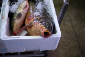 124761245-carp-at-a-fish-market-bologna-italy-gettyimages